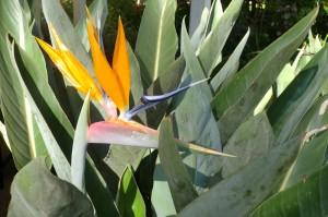 Tijdens onze vakantie in Kenia zagen we veel bijzondere planten.