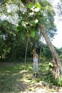 Tijdens de vakantie hadden we ook wat meer tijd om dingen in en om het huis te doen. Michiel heeft vooral veel gesnoeid. Na de regenperiode zijn bomen en heggen namelijk behoorlijk gegroeid!